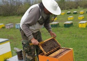 Οι επιχορηγήσεις μελισσοκόμων για νέες κυψέλες και μετακινήσεις