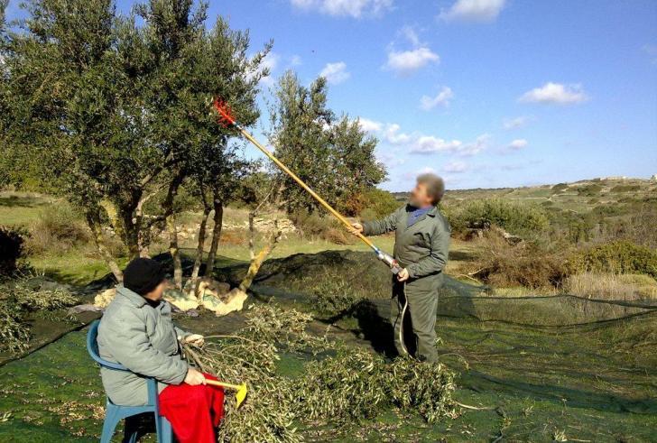 Άνεργοι από όλη την Ελλάδα έρχονται στην Κρήτη για το λιομάζωμα!