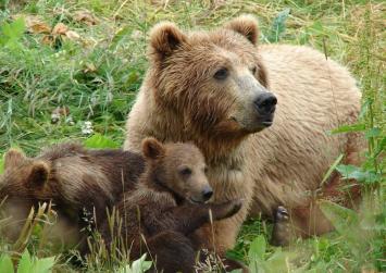 Αρκούδες έκαναν βόλτες στην Καστοριά !