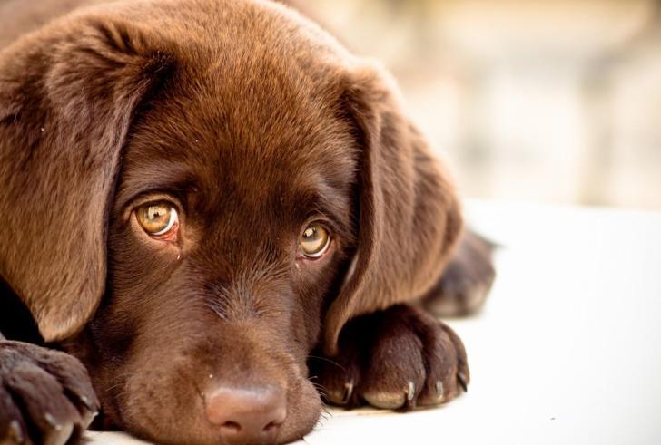 Συλλήψεις και εντατικοί ελεγχοι για παραβάσεις της Νομοθεσίας περί ζώων συντροφιάς