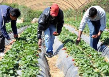 ΟΓΑ: Εξάμηνη άδεια εργασίας για αλλοδαπούς αγρότες