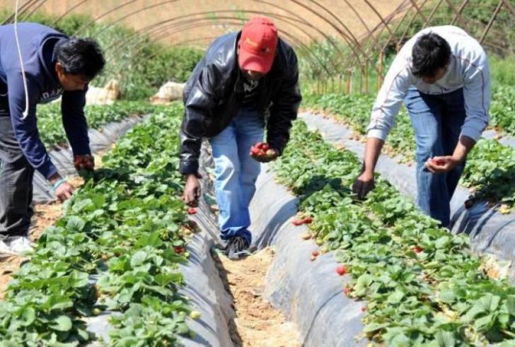 Δικαιολογητικά και επιτρεπόμενες ώρες εργασίας παράτυπων μεταναστών σε καλλιέργειες