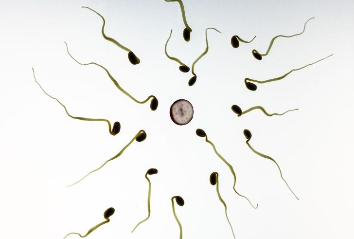 Ζητούνται… καλοί κομμουνιστές, χωρίς φαλάκρα για δωρεά σπέρματος
