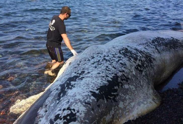 Οι πλαστικές σακούλες σκότωσαν τη φάλαινα που ξεβράστηκε στη Σαντορίνη