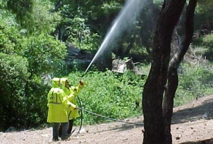 Αποτέλεσμα εικόνας για ψεκασμός των ελαιόδεντρων