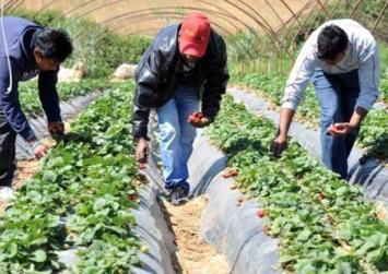 Κρήτη: Αύξηση του αριθμού εποχικών εργατών γης τρίτων χωρών ζητά ο Κεγκέρογλου