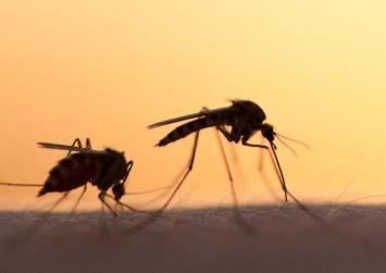 Νέος κύκλος ψεκασμών για την καταπολέμηση των κουνουπιών