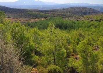 Καμπανάκι στο Δήμο Γόρτυνας για την δασική λίστα – Τι γίνεται με τον Δήμο Φαιστού και άλλους δήμους της Κρήτης