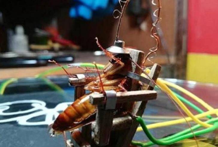 Κατσαρίδα σε ηλεκτρική καρέκλα… (Βίντεο)