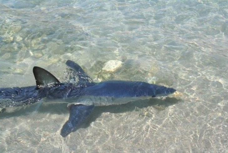 Κρήτη: Κολυμπούσαν μαζί με τον καρχαρία! (Βίντεο)
