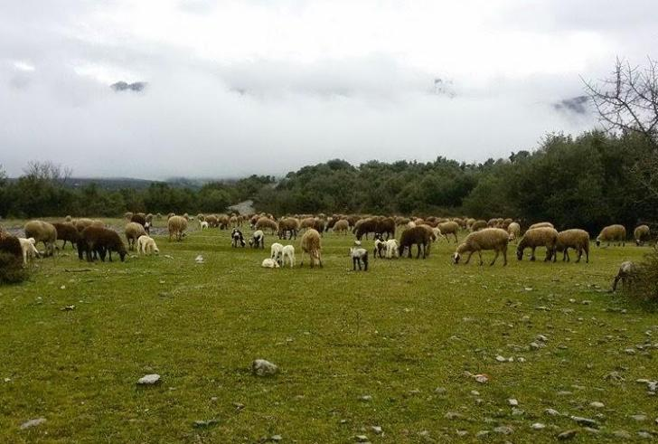 Ηράκλειο: Νέος εμπαιγμός αγροτών και κτηνοτρόφων που εξαιρούνται από την εξισωτική