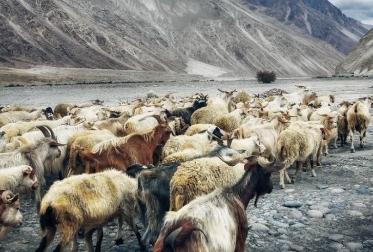 Έκτακτες κρατικές ενισχύσεις 2 εκατ. ευρώ στους κτηνοτρόφους της Κρήτης