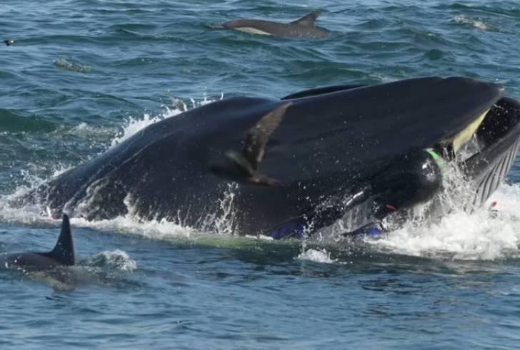 Φάλαινα κατάπιε δύτη και αυτός επέζησε (φώτο+βίντεο)