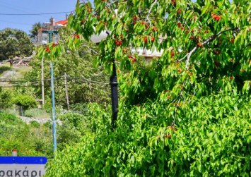 Γερακάρι: Προορισμός στο κερασοχώρι του Αμαρίου (φώτο)