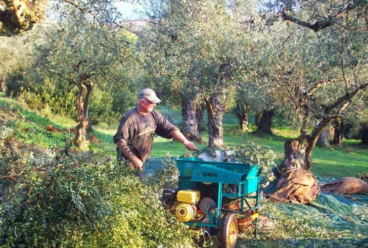 Έχει μέλλον η ελαιοκαλλιέργεια στην Κρήτη;