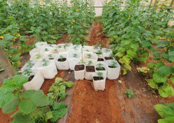 Τυμπάκι: Εντοπίστηκαν σε θερμοκήπιο 3.250 φυτά ινδικής κάνναβης (φώτο)