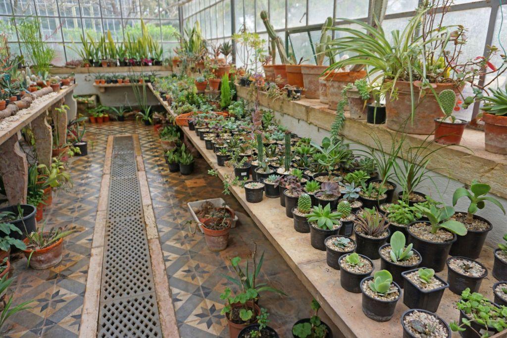 Greenhouse at the Jardim Botânico da Ajuda