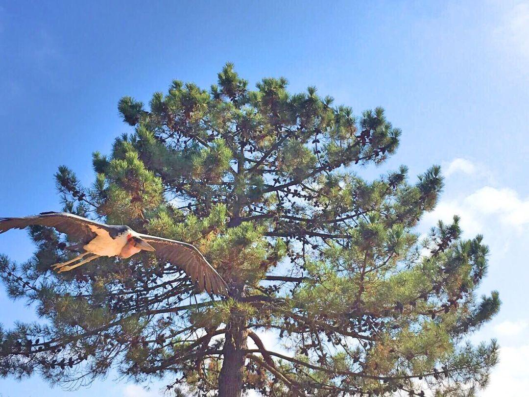 Birds of prey at Badoca Safari Park