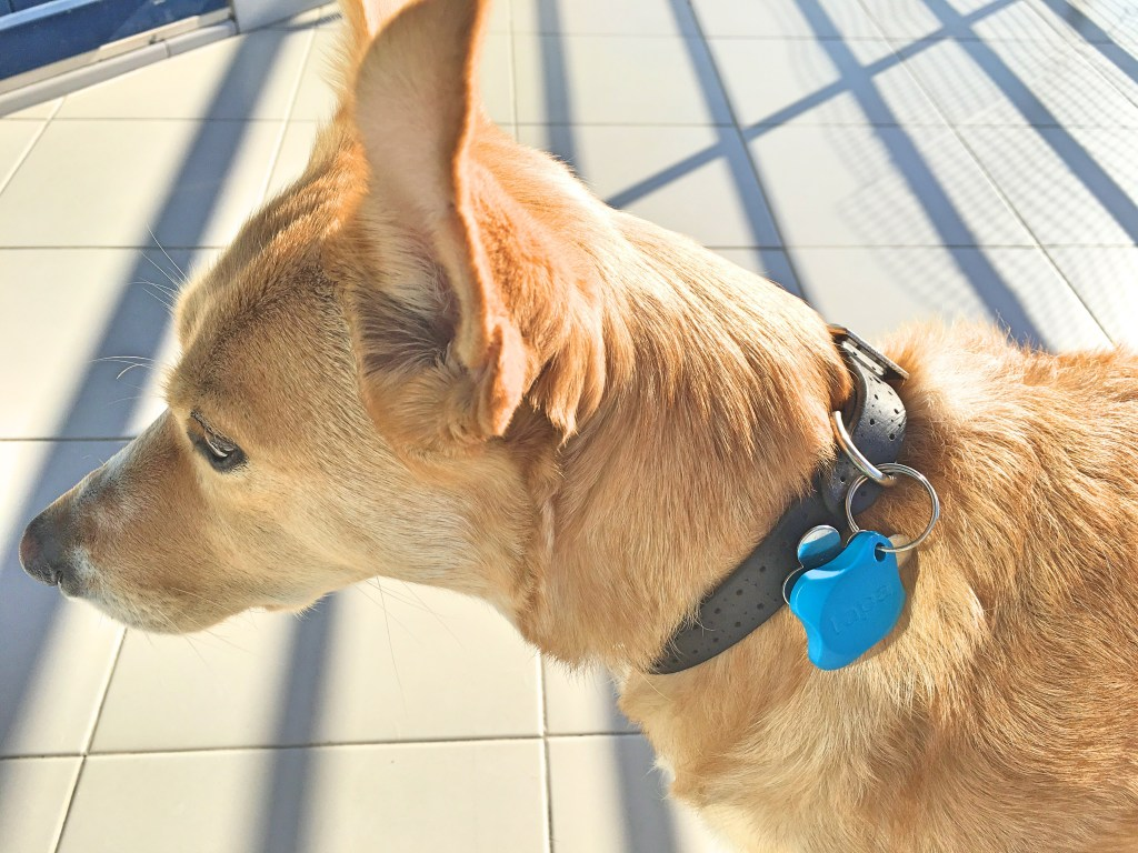 Lapa bluetooth tracker dog