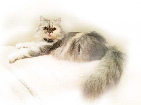 Foto gemacht, in MobileMonet geladen und dann nur mit dem Finger die Bereiche aktiviert, die Farbe bekommen sollen. Fertig ist das kleine Kunstwerk in 800 x 600 mit einer Auflösung von 96 DpI. Das Bild zeigt unsere Katze Flöckchen...
