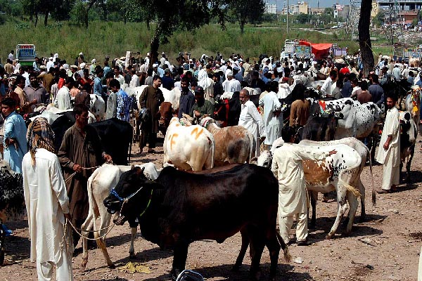 Eid-ul-Azha being celebrated in country amid Covid-19 SOPs