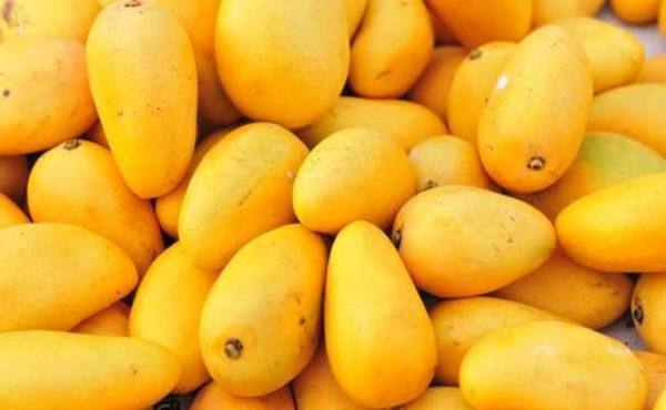 How to benefit from Pakistani 'king of fruit' mango: Renmin University fellow