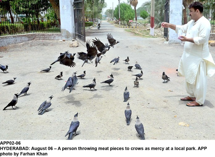 HYDERABAD: August 06 – A person throwing meat pieces to crows as mercy at a local park. APP photo by Farhan Khan