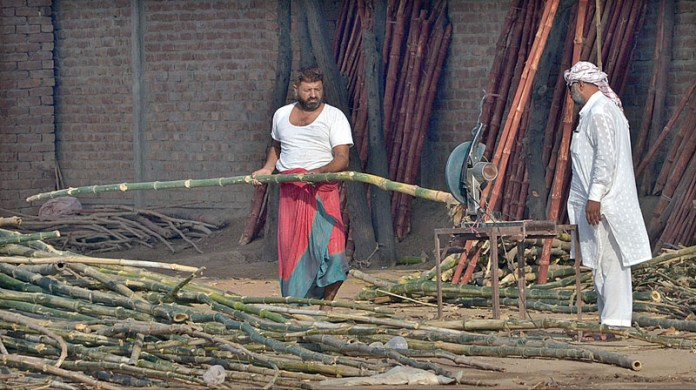 MULTAN: September 30 - Workers cutting bamboos before preparing different items. APP photo by Safdar Abbas