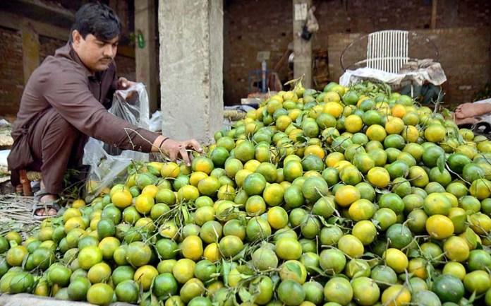 PESHAWAR: October 20 - A vendor displaying and arranging oranges to attract the customers at Fruit Market. APP Photo by Shaheryar Anjum