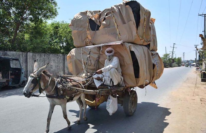 SIALKOT: October 26 - A donkey cart holder on the way loaded with heavy luggage to deliver in a local market. APP Photo by Muhammad Munir Butt