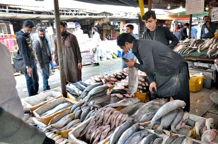 ISLAMABAD: November 22 – A vendor displaying fish to attract the customers at stall in H-9 Weekly Bazaar