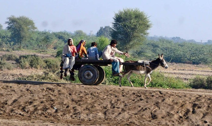 HYDERABAD: November 10 – People travelling on donkey cart in the village. APP photo by Akram Ali