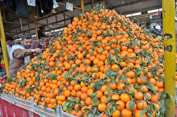 ISLAMABAD: November 22 – A vendor arranging and displaying oranges to attract the customers at his stall in Sunday Bazaar Aabpara