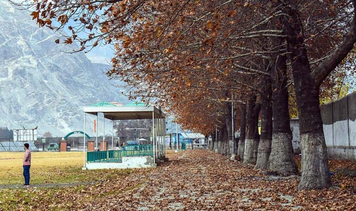 A view of fallen dry leafs to mark autumn season at City Park