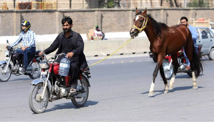 RAWALPINDI: November 02 – A motorcyclist on the way leading his horse at Airport Road. APP photo by Abid Zia