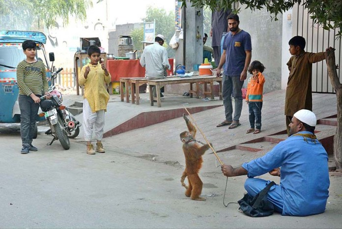 FAISALABAD: November 10 - A juggler showing gimmicks of his pet monkey. APP photo by Tasawar Abbas