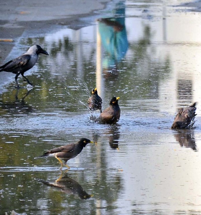 A view of birds enjoying bathing in water at a roadside