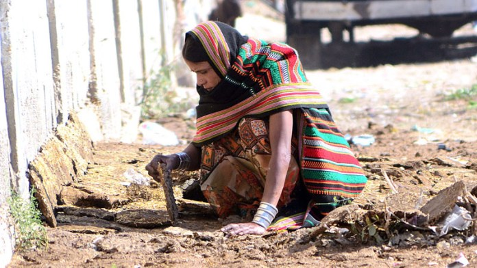 A female villager collecting the dried dung-cakes to be used as fuel for cooking
