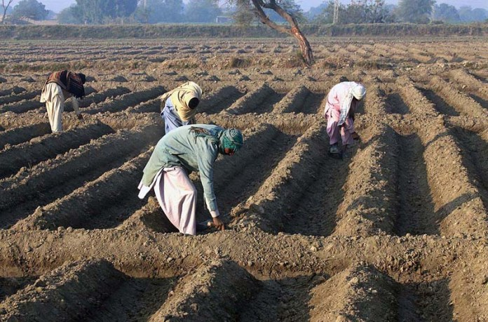 Formers preparing their field for next crop at Husri Village