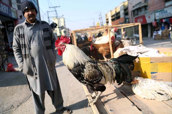 A street vendor displaying chicken to attract customers at Dhok Khabba