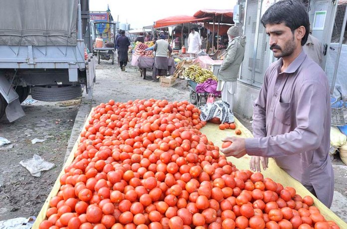 A vendor displaying and arranging tomatoes to attract the customers at his roadside setup