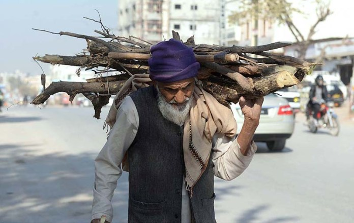 An elderly person on the way back while carrying dried tree branches to be used as fuel for cooking purposes at Chaklala Scheme-III