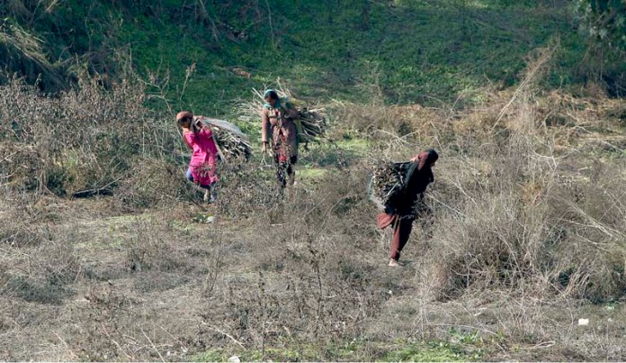 Women busy in collecting dried branches of tree to be used as fuel for cooking purposes at Khanna Pul neighbourhood