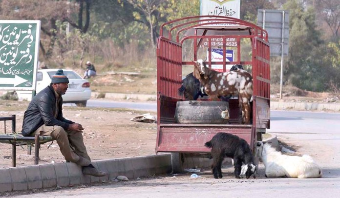 A vendor displaying livestock in his Suzuki pick up vehicle along the roadside to attract customers at Airport Road