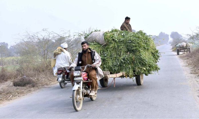 Farmer using motorcycle instead of animal to pull cart loaded with fodder
