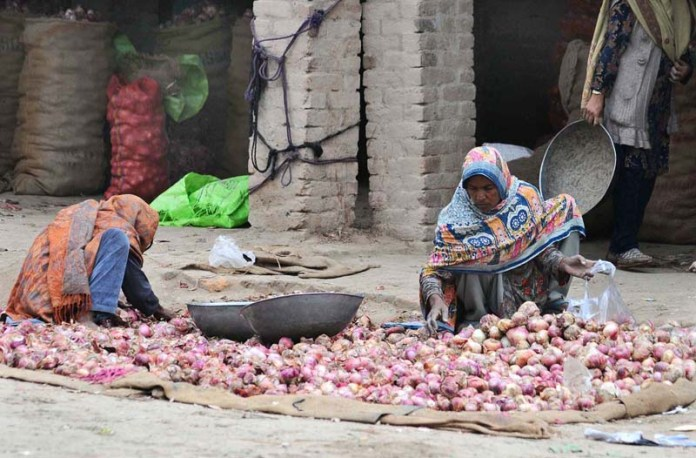 An elderly female labourer busy in sorting onion at vegetable market