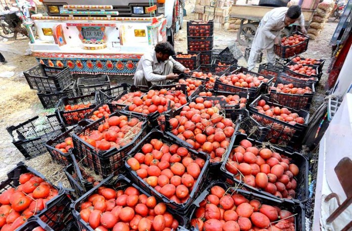 Labourer busy in arranging and packing tomatoes for delivery at vegetable market