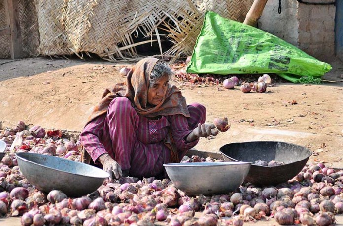 An elderly woman busy in sorting good quality onion at Vegetable Market to earn livelihood