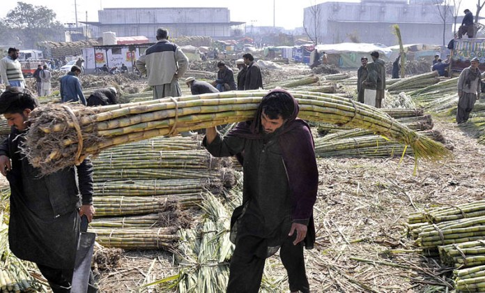 Labourers shifting bundle of sugarcanes for supply at Vegetable Market