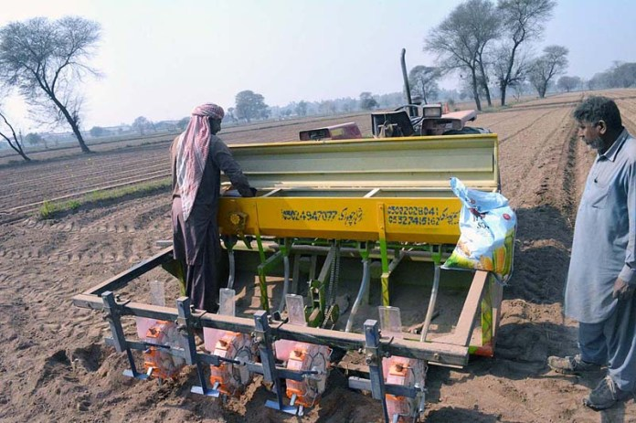 Farmer busy in sowing corn in their field